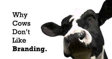 CowsBranding_humor-ch2